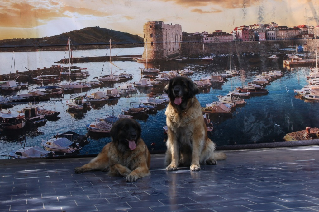 CAC, ResCACIB Dubrovnik 2018