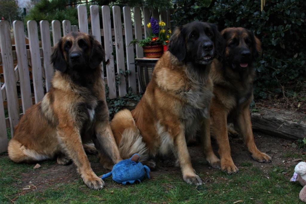 Ilvy mit ihren Kindern Caprina und Zeus