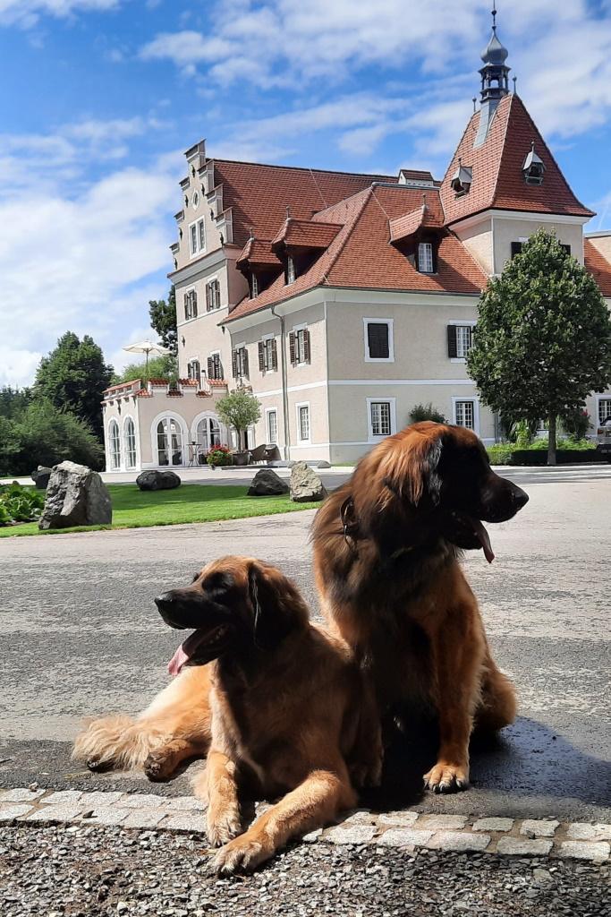 Wir achten auf unser Schloss in der Steiermark