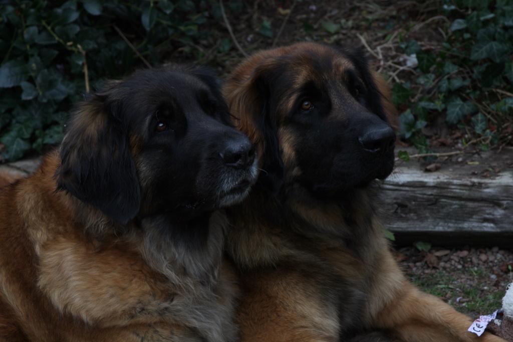 Zeus mit seiner Mama Ilvy